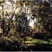 Image of 2010.61.247 - Trees in Wetlands