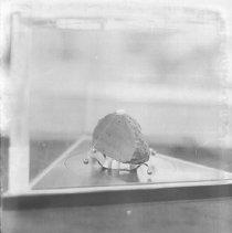 Image of Apollo 11 Lunar Rock on display at the 1972 Napa County Fair