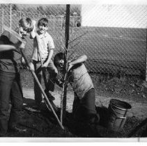 Image of 2011.61.900 - Three boys of the Pueblo Vista 4-H club planting a tree near the school.