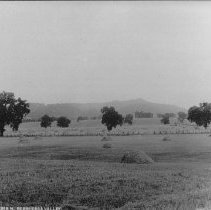 Image of 2002.43.286 - Field and oak trees in Berryessa Valley