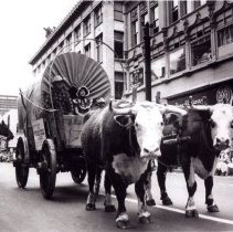 Image of Holland House wagon and oxen team