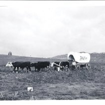 Image of Holland House wagon and oxen at Pete Morrison's ranch