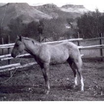 Image of Lu Holland's Palomino