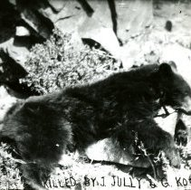 Image of Bear killed by Jully & Koch
