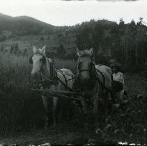 Image of Joe Jully Jr. mowing oats on the family homestead.