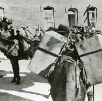 Image of Pack burros