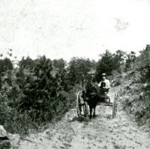 Image of Buggy ride on Chimney Gulch road