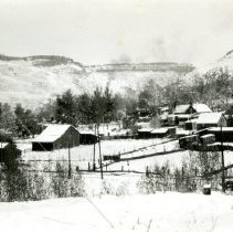 Image of Golden in the wintertime