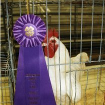 Image of Grand Champion chicken