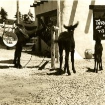 Image of Lariat Trading Post burros