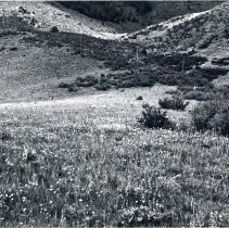 Image of Incline trail on Lookout Mountain in Golden in 1930s