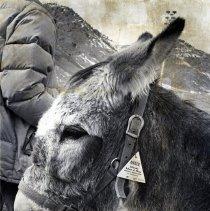 Image of CSM burro mascot at game