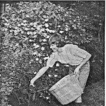Image of The Lincoln Garden - S.G. Wertz