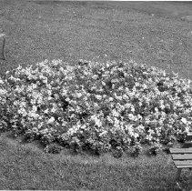 Image of Flower Bed - S.G. Wertz