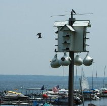 Image of Birdhouse at Shoreline - Roehrig, Michele