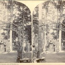 Image of View on S.S.A. Grounds--Chautauqua - Walker, L.E.