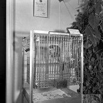Image of Animal in a cage