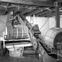 Image of Workers loading grapes