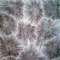 Image of R_2005.07.01.04_JPG