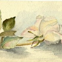 Image of Rose Watercolor - Painting