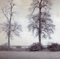 Image of P1936.1.119 - Print, Photographic