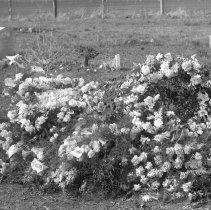 Image of Gravesite 9