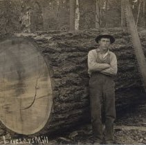 Image of tree  and cross-cut saw
