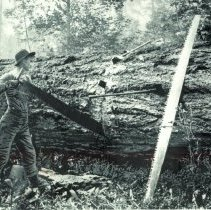Image of Sawing a tree with a crosscut saw - 2016FIC3515