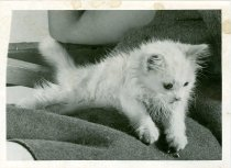 Image of RG4121.AM.S6.F56 CATS 14