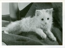 Image of RG4121.AM.S6.F56 CATS 15