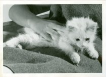 Image of RG4121.AM.S6.F56 CATS 16