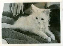 Image of RG4121.AM.S6.F56 CATS 18