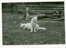 Image of RG4121.AM.S6.F56 CATS 21