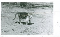 Image of RG4121.AM.S6.F56 CATS 22