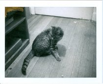 Image of RG4121.AM.S6.F56 CATS 3