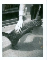Image of RG4121.AM.S6.F56 CATS 4