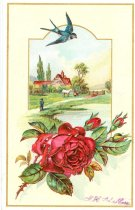 Image of 10861-129 - Card, Trade, Hargreaves Bros., Lincoln; Wholesale Grocers, Star Coffee