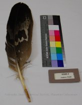 Image of 10906-2 - Feather, Eagle