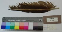 Image of 11343-40-(7) - Feather; Eagle; 7 of set of 19