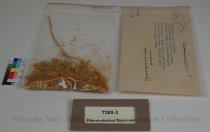 Image of 7289-3 - Ethnobotanical Specimen; Sneeze Weed
