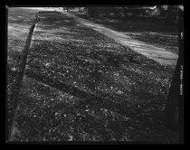 Image of RG2183.PH001949-001019-8 - Negative, Sheet Film