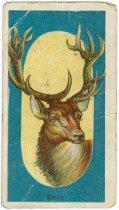 Image of 11880-91 - Card, Advertising; Deer, Menagerie Gum