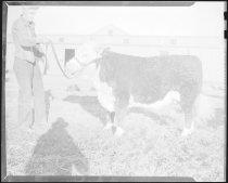 Image of RG3882.PH0002-0795 - Negative, Sheet Film