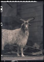 Image of RG3882.PH0002-0730 - Negative, Sheet Film