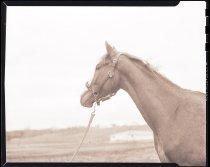 Image of RG3882.PH0002-0752 - Negative, Sheet Film