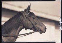 Image of RG3882.PH0002-0805 - Negative, Sheet Film
