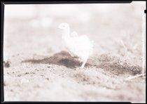 Image of RG3882.PH0003-0890 - Negative, Sheet Film