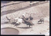 Image of RG3882.PH0003-0894 - Negative, Sheet Film