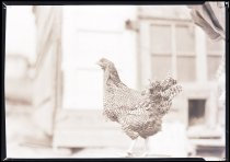 Image of RG3882.PH0003-0922 - Negative, Sheet Film