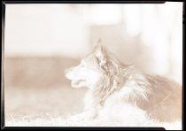 Image of RG3882.PH0003-0971 - Negative, Sheet Film